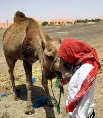 サハラ砂漠でらくだのジミーと私