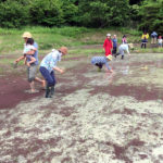 米から味噌まで 田植え