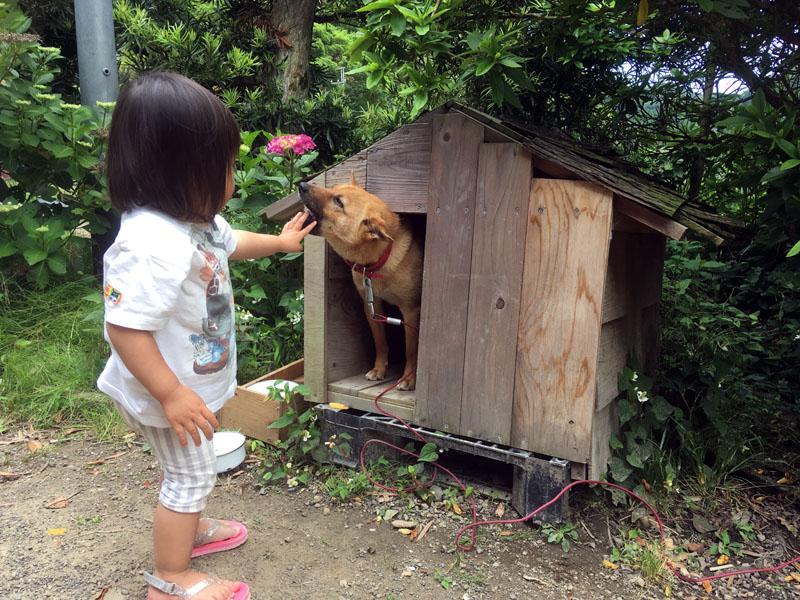 犬のあわと遊ぶ女の子