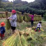 米から味噌まで2018稲刈り