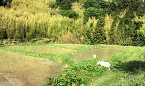 庭を散歩するあわ(犬)とひじき(ヤギ)