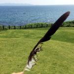 トンビ?の羽 大房岬公園
