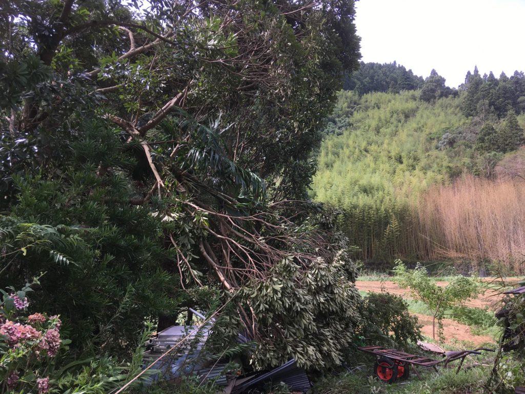 台風15号で木が折れる