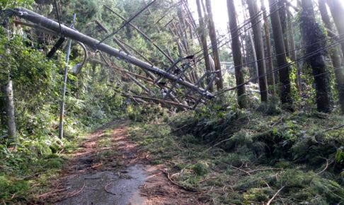 台風15号で倒れた木と電信柱