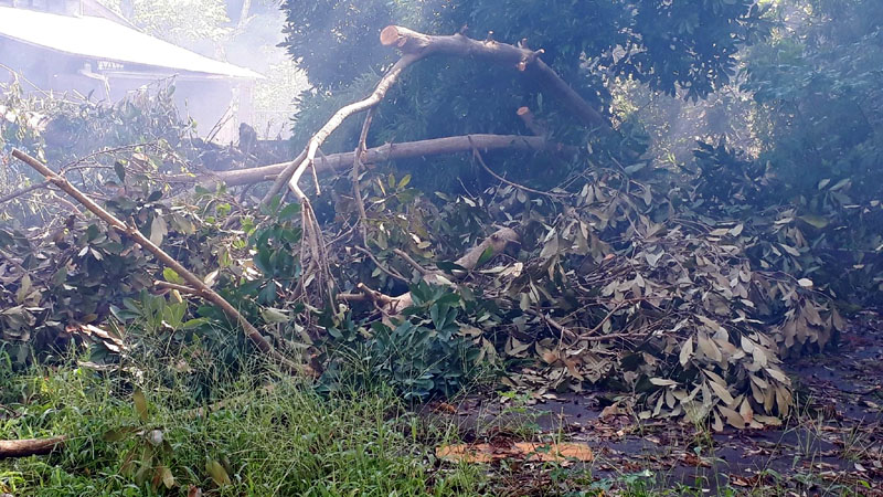 通りに出る道も、通りも倒木で塞がれていた