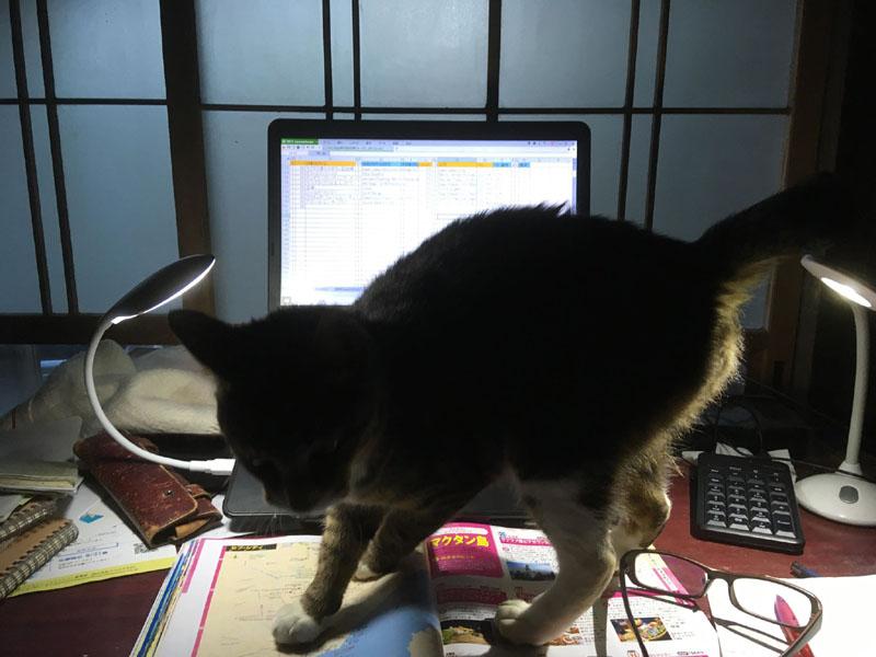 パソコン作業してるとすぐに寄って来るワラワラ