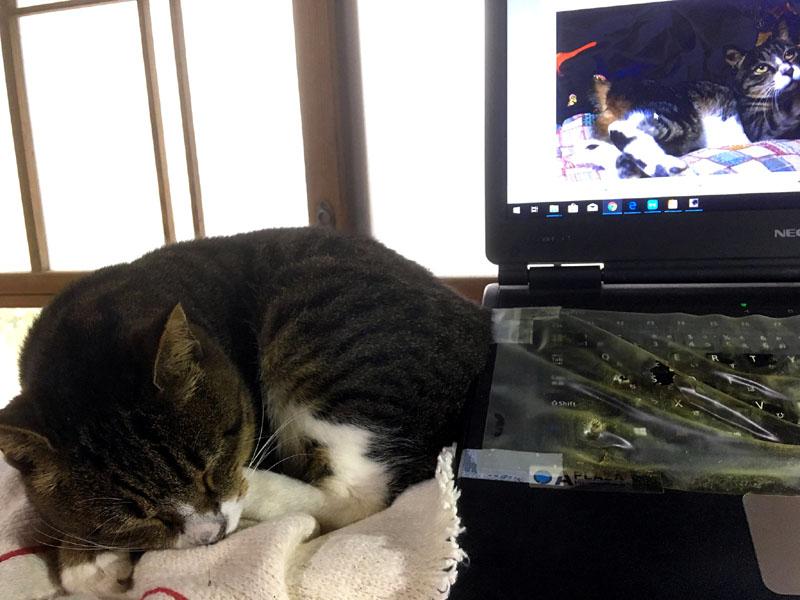 パソコンの横で眠るワラワラ