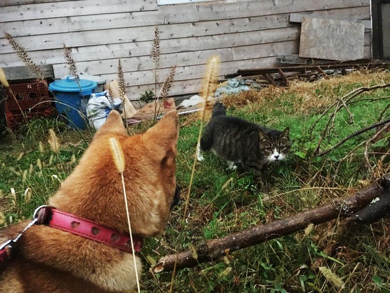 猫のワラワラと犬のあわ