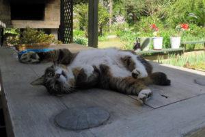 猫のワラワラ