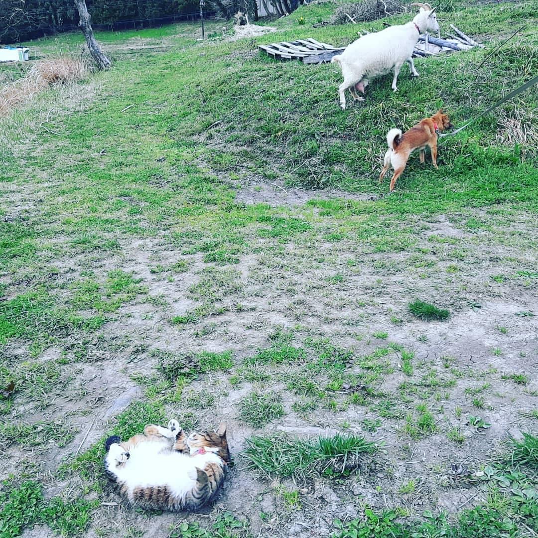 ヤギのひじき、犬のあわ、猫のワラワラ