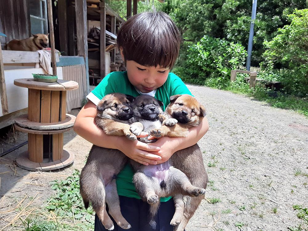 抱きかかえられた3匹の子犬